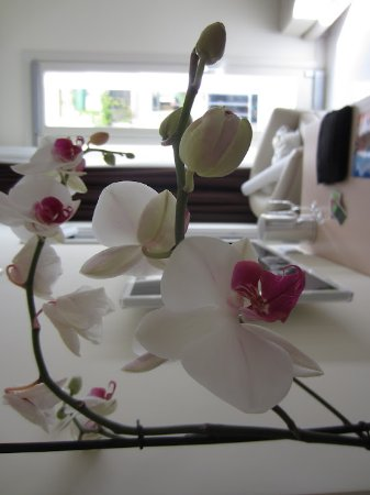 Palazzo Montefusco Sorrento: Beautiful orchids in our room.