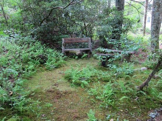 Highlands Biological Station, Nature Center And Botanical Gardens: Restful  Moss Garden