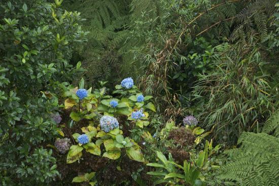 Serra Verde Express: Wild blue hydrangeas