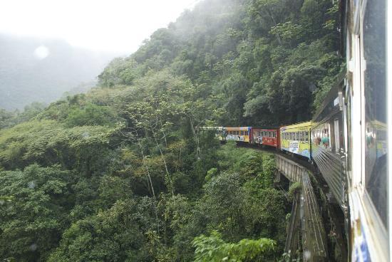 Serra Verde Express: Climbing through the Atlantic Rainforest