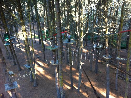 Adrenaline Forest: Looking down at some of the many platforms and obstacles.