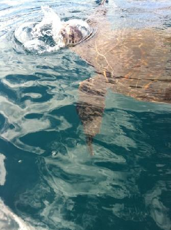 Wailea Beach: swim with the turtles