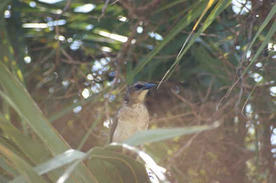 St. Marks National Wildlife Refuge: Bird in tree.