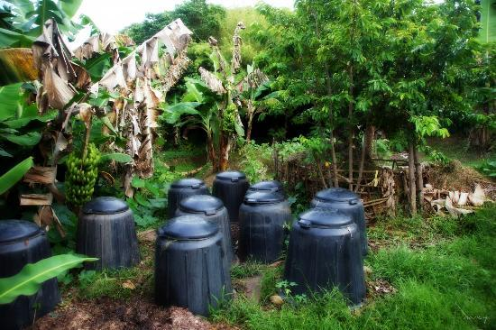 Oneta Resort: Truly a Resort that is organic living. The compost.