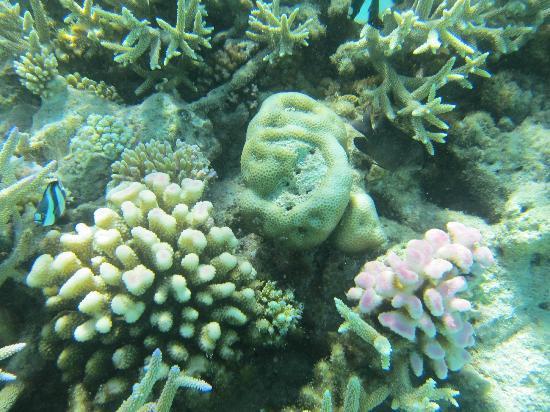 Reef near the water villa and sunset bar