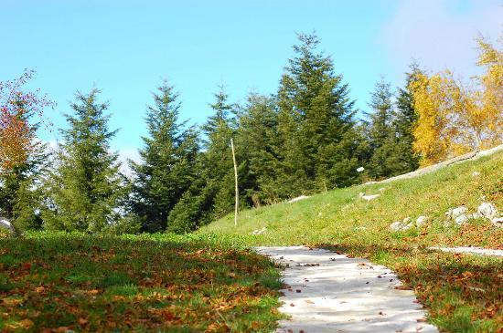 Capracotta, Italia: il bosco