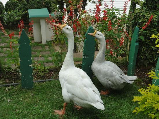 Igloo Nature Resort: Two Swam in the Garden