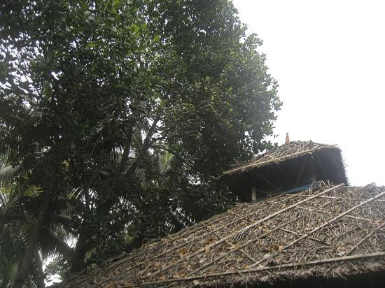 Shiva Garden: Roof