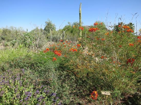 desert bloom tucson az