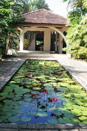 Barberyn Reef Ayurveda Resort: The Lotus pond at Barberyn reef
