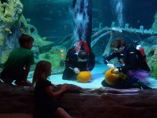 SEA LIFE Grapevine: Underwater Pumpkin Carving