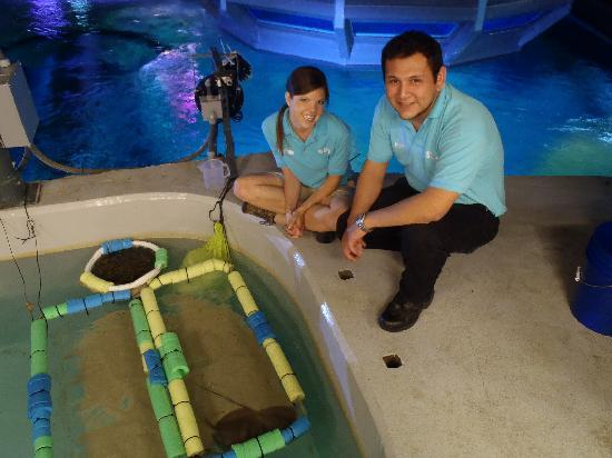 SEA LIFE Grapevine: Our new baby Sting Rays!