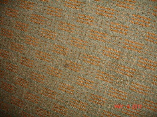 Econo Lodge: dirty carpet