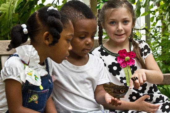 Museum of Life + Science: Visit Magic Wings Butterfly House, one of the largest tropical conservatories in the southeast.
