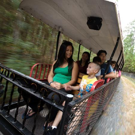 Museum of Life + Science: Take a ten minute relaxing train ride.