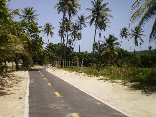 Paseo Lineal: Palm trees......