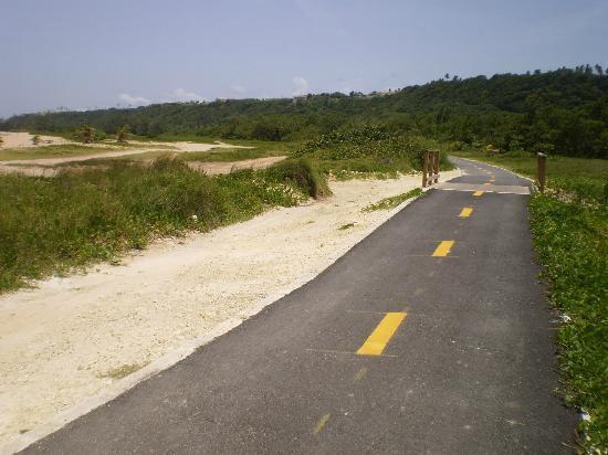 Paseo Lineal: Mangrove lane area...