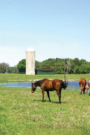 Sleep Inn & Suites Wildwood - The Villages : Sumter County is the perfect place to to go horseback riding.  Photo provided by the Sumter COun