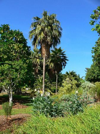 Maui Nui Botanical Gardens: MNBG is a nonprofit focused on preserving Native Hawaiian & Polynesian-introduced plants.