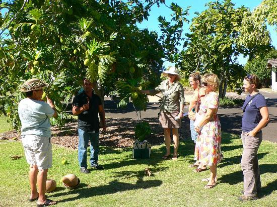 Maui Nui Botanical Gardens: Free Guided Tours offered at 10am on Mon/Tues/Fri/Sat. Call 808-249-2798 for reservations.