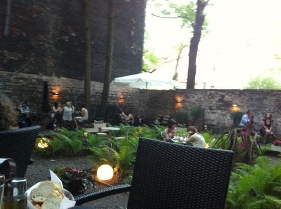 Dynia: Backyard