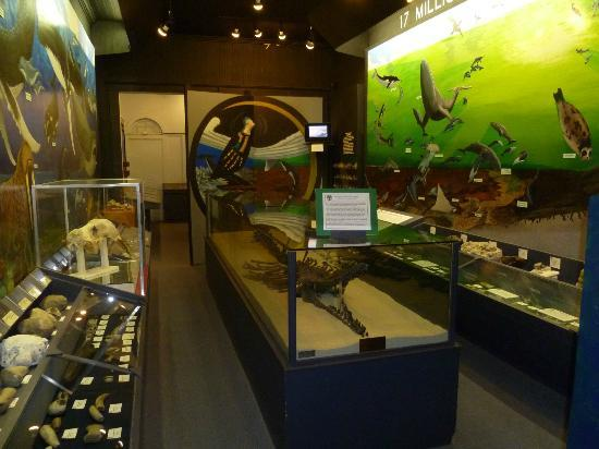 Aurora Fossil Museum: One of the exhibit rooms with a whale fossil