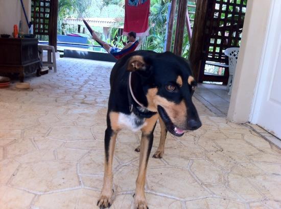 Harry's, El Escondite: best dog ever