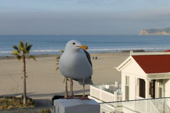 Beach Village at The Del: Irving the Seagull coming from Breakfast