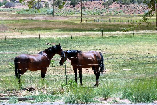 Red Sands Hotel: Horses on the property
