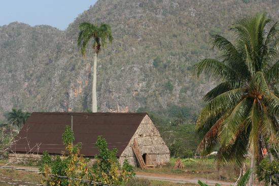 Casa Particular Ridel y Claribel: Blick vom Balkon auf Tabakfelder und Nationalpark