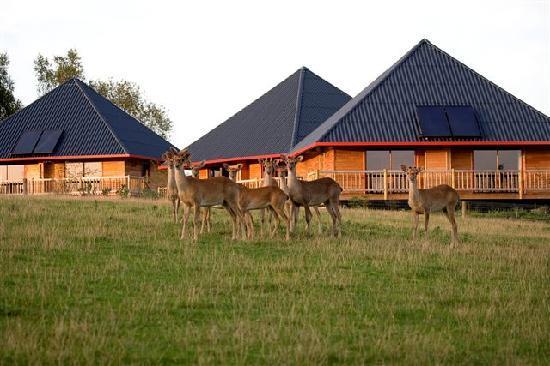 Cerza Safari Lodge : Vue sur les cerfs d'Asie