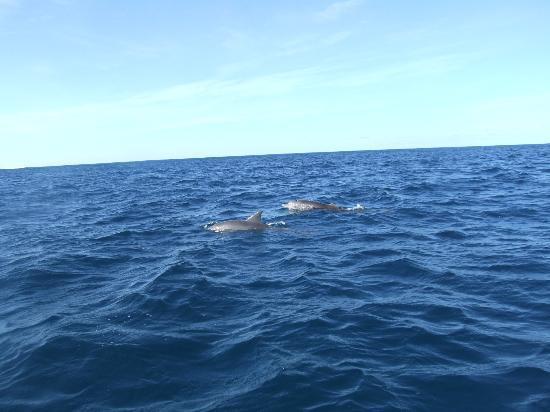 Le Morne Beach: les dauphins