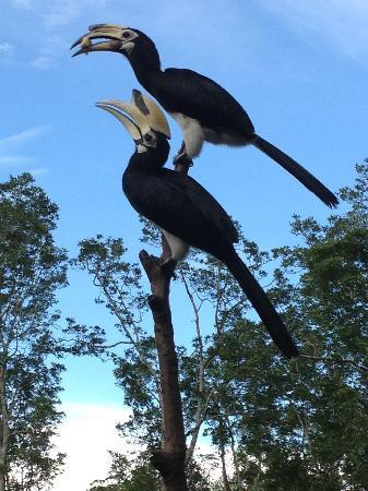 Paganakan Dii Tropical Retreat: Birdlife