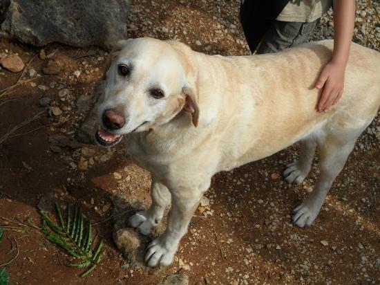 Camping La Ferme de Perdigat : le chien du camping: Myrtille