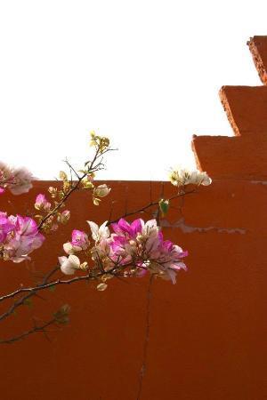 Riad Khabia: rooftop