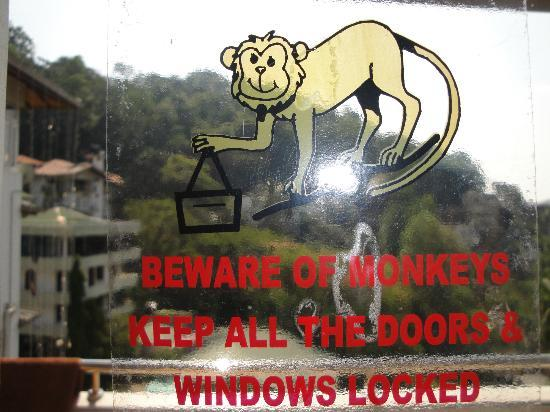 Oak Ray Serene Garden Hotel: Beware of the monkeys !!!