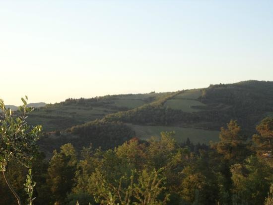 Poggio all'Olmo: More amazing views from the grounds