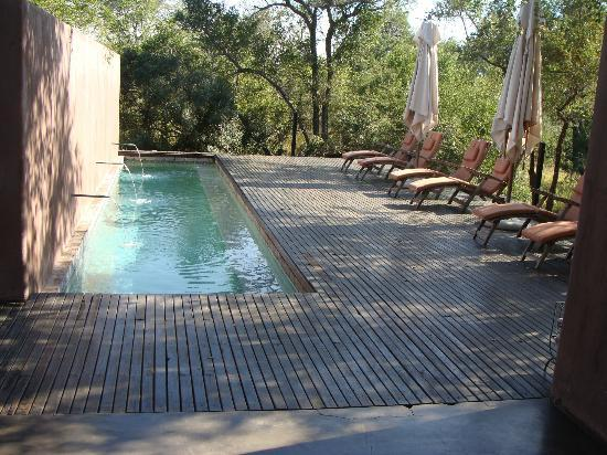 Honeyguide Tented Safari Camps: The 'lap' pool isnt much of a lap pool at all