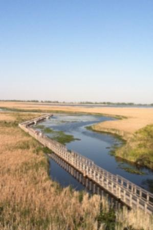 Point Pelee National Park: Birdy marshland