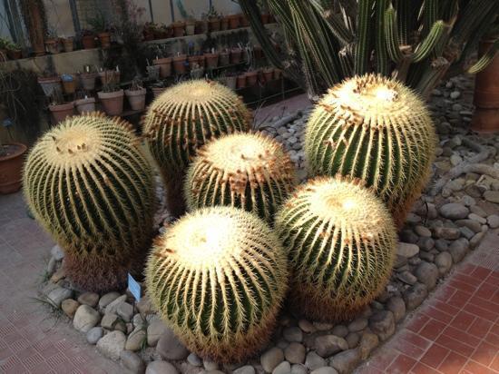 Piante grasse foto di orto botanico di palermo palermo for Tutte le piante grasse