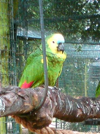 Amazona Zoo: One of the parrots that stole our heart!