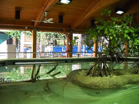 Gumbo Limbo Nature Center: The Mangrove Tank