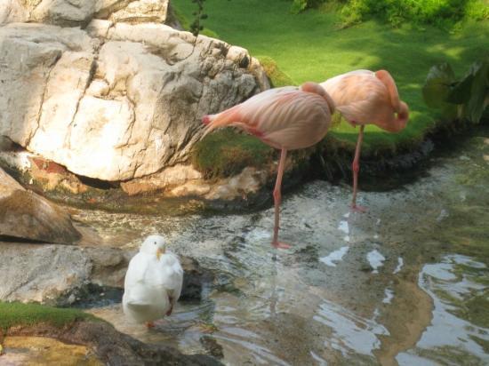 Jard n fotograf a de princess mundo imperial acapulco for Jardin 7 17 acapulco