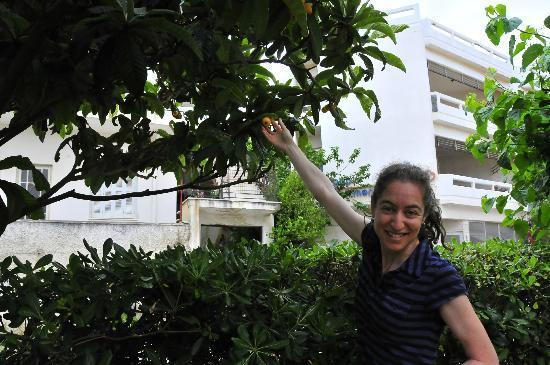 Lefka Apartments: Fruit from the Moushmoula tree