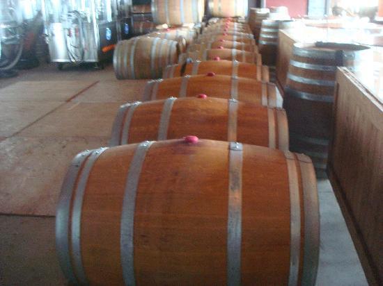 Saltwater Farm Vineyard: wine barrels