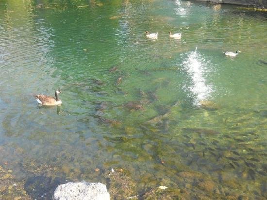 Port Jefferson, Ohio: Fish & Ducks Oustide of Hussey's