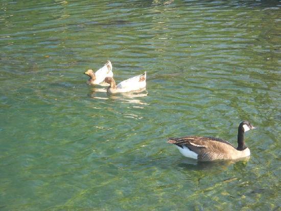 Port Jefferson, Ohio: Ducks outside of Hussey's