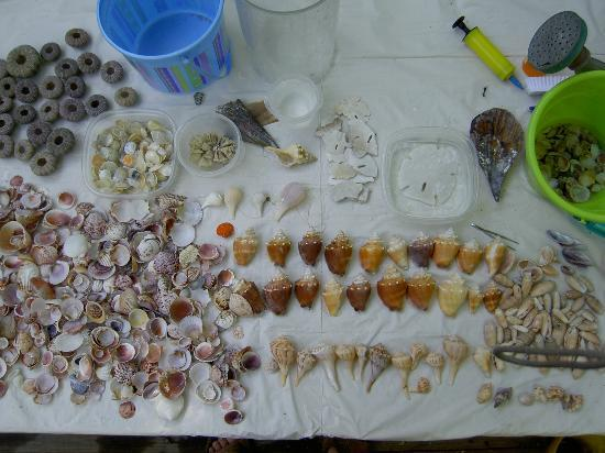 West-End Paradise: part of our shelling finds