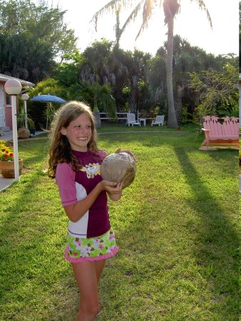 West-End Paradise : coconut straight from the tree at the inn