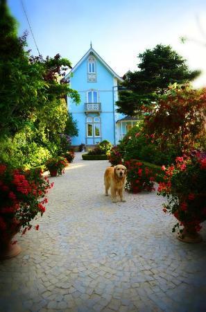Bed and Breakfast Villa Mira Longa : Garden